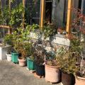 シンボルツリーにおすすめの展示場の庭木をご紹介!