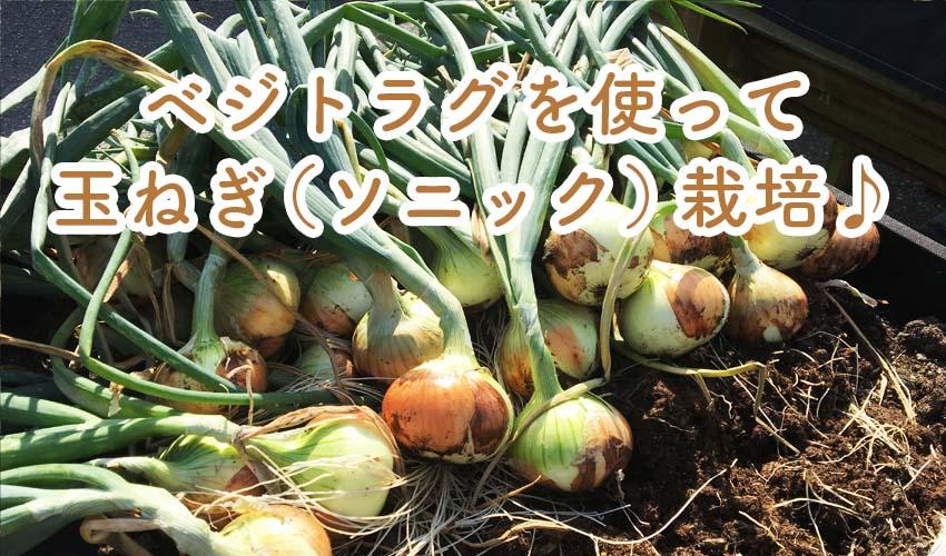 栽培 玉ねぎ 方法 の